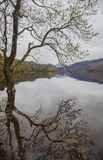Lake District, England - dark, gloomy autumnal day, a tree and its reflection. This image shows a view of a lake in Cumbria, Lake District, England. It was royalty free stock image