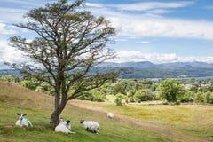 Lake District landscape Royalty Free Stock Photo