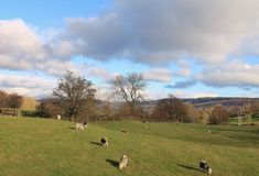 Lake District National Park Rolling English Countryside Cumbria Stock Images