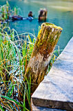 Lake dock pile Royalty Free Stock Image