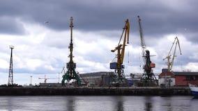 Lake docks and gulls stock video