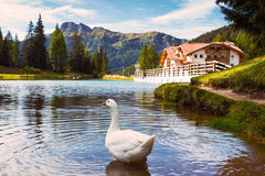 Lake at the Dolomites mountains Stock Photography