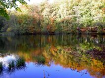 Lake in the forrest. A lake dressed in autumn colors just outside Copenhagen Denmar Royalty Free Stock Images