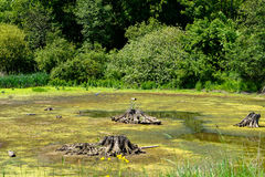 Lake drought Stock Photos