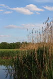 On the lake. Dry reeds and blue sky Stock Photo