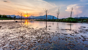 Lake with dry tree and mountain in sunset Stock Image