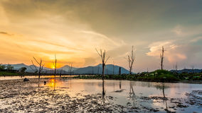 Lake with dry tree and mountain in sunset Stock Photos