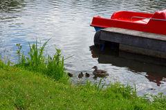 Lake with duck family. A duck family at the shore of a lake at a nice sunny day royalty free stock photography