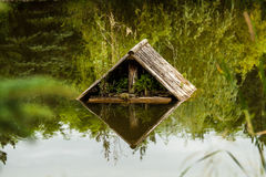 Lake. Duck home on the small lake Royalty Free Stock Images