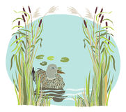 Lake and duck in the reeds Stock Photography