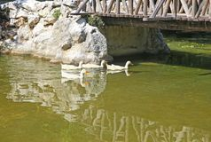 Lake with ducks at the National Garden of Athens Greece stock images