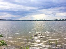 Lake with ducks in Poland Stock Photography