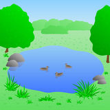 Lake with ducks, vector illustration. Beautiful lake with ducks, summer landscape, vector illustration Stock Photos