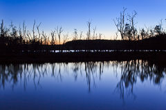 Lake Durras Trees Ref Dark Stock Images