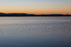 Lake at dusk with birds. A dusk at a lake, with some ducks and trails on the water Royalty Free Stock Images