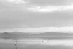 A lake at dusk, with soft tones, distant hills and mountains, so. Me ducks on the water and wooden poles in the foreground Royalty Free Stock Photos