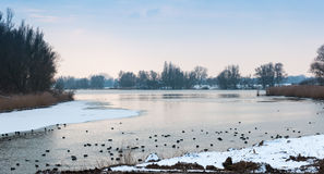 Lake in a Dutch nature reserve at dusk Royalty Free Stock Image