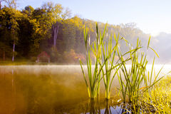 Lake in the early autumn morning. In Kiev Royalty Free Stock Images