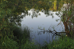 Lake in the early morning. Vegetation in the vicinity of the lake. Early morning Royalty Free Stock Image