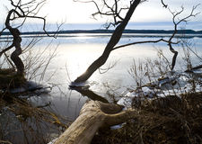 Lake in the early spring royalty free stock images