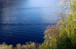 Lake in early spring. And blooming vegetation Royalty Free Stock Photography