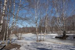 Lake in early spring forest Stock Image