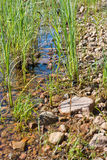 Lake edge. With red granite rocks and aquatic grass in a sunny summer day in Varmland, Sweden royalty free stock image