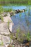 Lake edge. With red granite rocks and aquatic grass in a sunny summer day in Varmland, Sweden stock photography