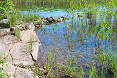 Lake edge. With red granite rocks and aquatic grass in a sunny summer day in Varmland, Sweden royalty free stock photo