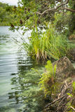 Lake Edge Royalty Free Stock Photography