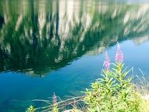 Lake of elder Stock Photography