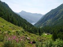 Lake of elder Stock Images