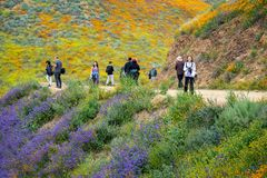 Happy, smiling photographers and tourists take photos and walk the trail at Walker royalty free stock photo