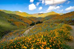 Tourists and hikers walk along the trail of Walker Canyon during the Poppy wildflower stock images