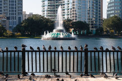 Lake Eola water fountain. Scenic view of lake Eola water fountain with downtown skyscrapers in background, Orlando, Florida, U.S.A Stock Image