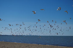 Lake Erie - sand beach and seagulls. Taken with DSLR camera at Port Clinton, OH Royalty Free Stock Photography