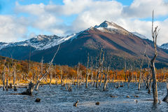 Lake Escondido, Isla Grande de Tierra del Fuego, Argentina Stock Photography