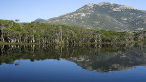 Lake and eucalyptus forest in australia Royalty Free Stock Image