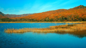 Lake in the evening. Lake in the autumn evening stock image