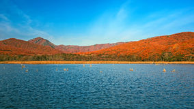 Lake in the evening. Lake in the autumn evening Stock Photos