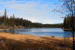 Lake and evergreen forest. A view of a lake and evergreen forest on the coast Royalty Free Stock Image