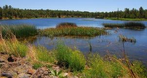 lake för 7 skog Arkivfoto