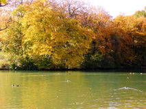 Lake in fall. Picture taken on the shore of a small lake on a particularly warm day in october stock photos