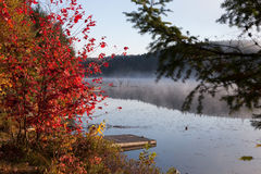 Lake in the fall forest, Canada. Lake in the fall forest Stock Image