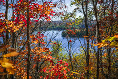 Lake and fall forest Royalty Free Stock Photography