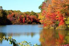A lake in the fall royalty free stock photo