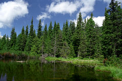 Lake with fallen trees. The small lake Taul dintre brazi from National Park Retezat, Romania Royalty Free Stock Photo