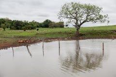Lake in Farm Stock Image