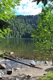 Lake Feldsee - Black Forest Stock Photography