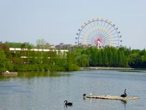 A lake with a Ferris wheel background at Shanghai wild animal park Royalty Free Stock Image